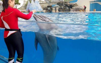 The dolphin park
