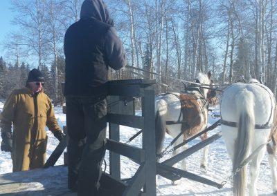 Fort St John Sleigh rides: High on ice