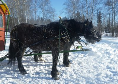 The sleigh ride at High on Ice, Forth St. John