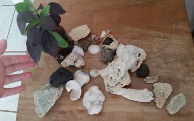 My seashells